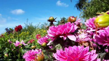 duurzame activiteiten botanische tuin