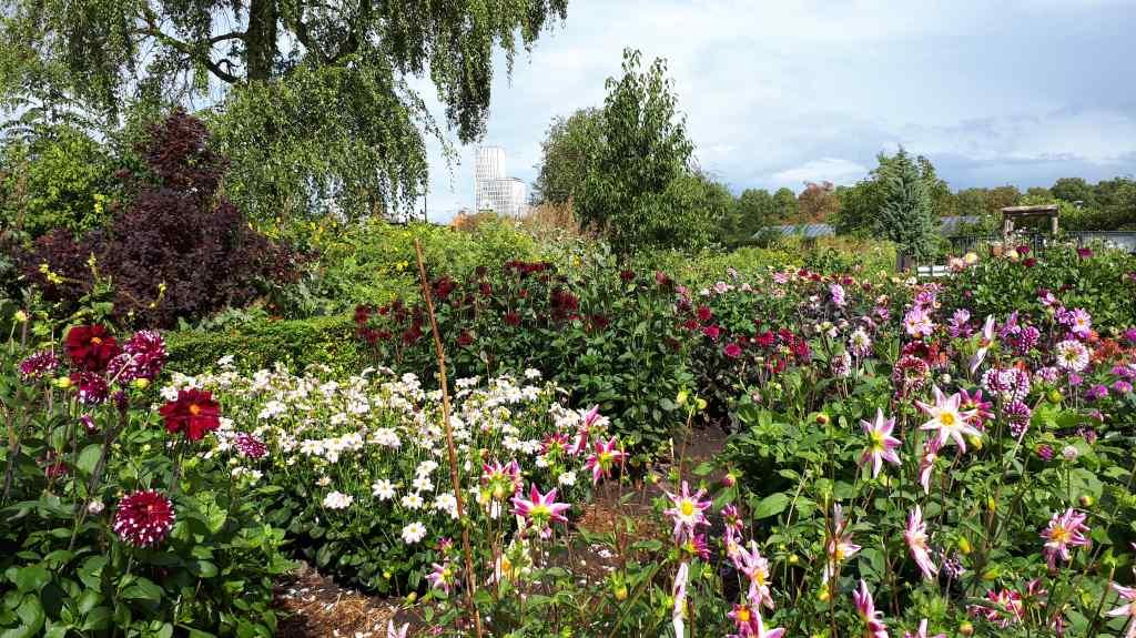 slottsträdgården malmo