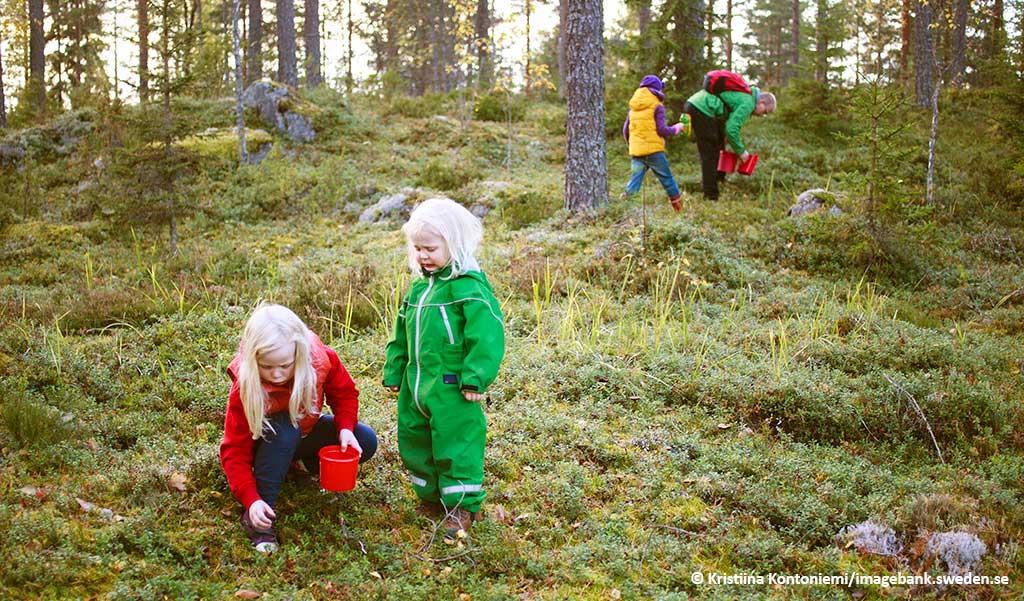 vakantie in zweden met het gezin